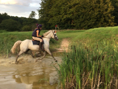 Connemara - All Rounder - 14.2 hh - Norfolk