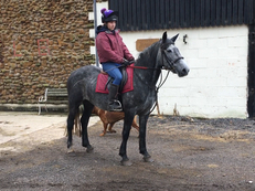 Cobs - 14.1 hh - Norfolk