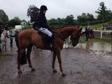 FOR SALE - Fabulous young event prospect. Gelding, 15. 2hh,