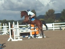 FANTASTIC SHOW JUMPER / HUNTER / EVENTER / ALL ROUNDER