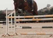 7yo Quality 16.3hh SJ/Eventer
