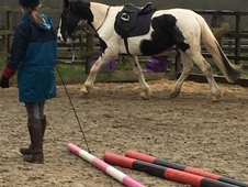 16. 2 piebald mare looking for sharer.