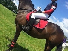 Sharer wanted for 15hh all rounder