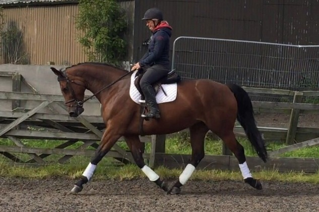 Lovely Mare 5yo approx 16hh