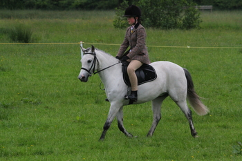 13.1 hh fun all-rounder