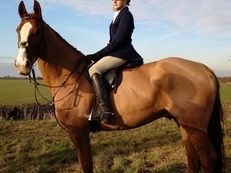 Hunter / allround / dressage / eventer
