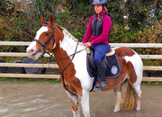 Susie - lovely pony club mare!