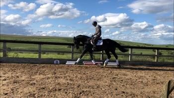 Outstanding dressage/jumping mare