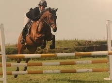 7yr old eventer/ all rounder
