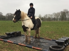 15.2 Coloured Weight Carrying Cob Mare