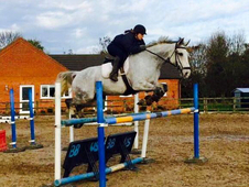 16. 3hh genuine allrounder/showjumper