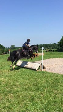 14.2hh Irish cob for loan in Ruislip