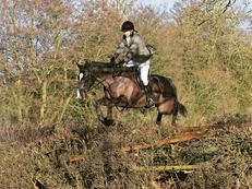 Lovely Allrounder / Riding Club / ROR potential