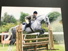 top class 155cm 5yr old mare for sale