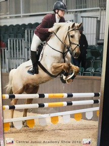 ****NOT TO BE MISSED*** 15hh 12 Year Old Stunning Palomino Gelding with Touch Down Blood Lines