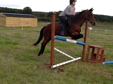 Full loan 15hh Horse wanted to move to surrey