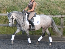 14hh 6 years mare