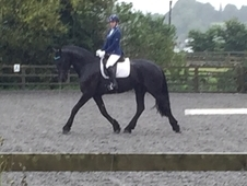 Stunning Black Registered Sport Friesian Gelding 7yrs, 16. 3hh