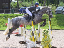 Ultimate Competitive Amateurs Horse