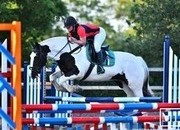 Stunning Chunky 15.2HH Mare