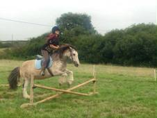 14-15HH horse wanted!