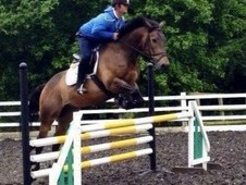 10 year old 16. 2hh bomb proof IDX by Clover Hill ❤
