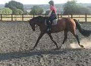 15.2hh, 11-year-old showjumper/allrounder