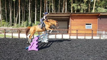 Lovely 15.2hh all rounder , fun mare