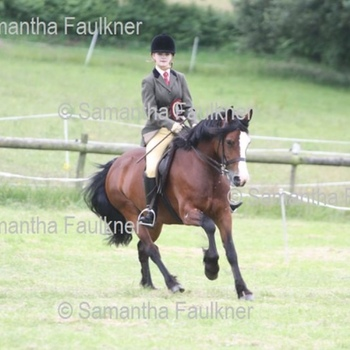 M&M Welsh Section D Mare 7 years old SCHOOLMASTER