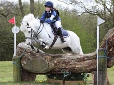 ROSIE 13h grey new forest hunting/jumping pony.