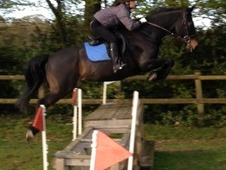 15-16hh wanted on loan/for sale