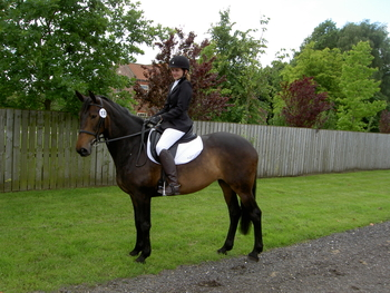 16.1  UNCOMPLICATED DRESSAGE MARE
