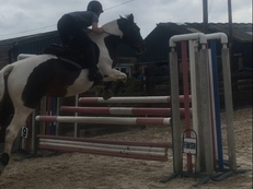 15,2hh coloured mare
