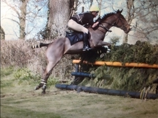 Great team chaser/ Hunter/ Showjumper