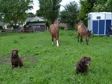 Grazing and Stable for rent