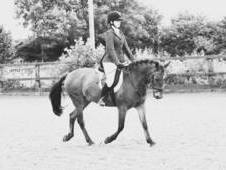 Competition / PC / SJ / All Rounder Pony