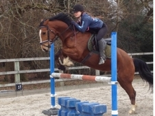 Talented mare for share