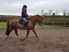 Stunning homered chestnut mare