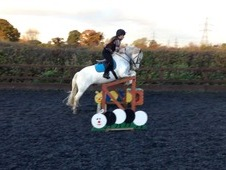 Superstar pony for part loan!