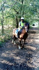 12.3hh Lovely kind welsh pony-deposit taken now