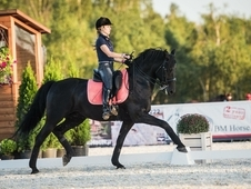 FEI Grand Prix 10 years old dressage gelding FOR SALE