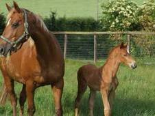 Catherston Stud's Foaling Service