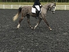 Dressage mare for sale