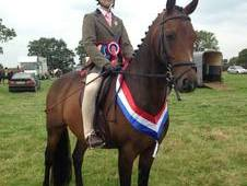 Fabulous Pony Club All Rounder