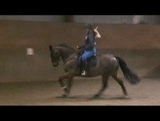 15hh 12 year old Dressage schoolmaster/ quality all-rounder