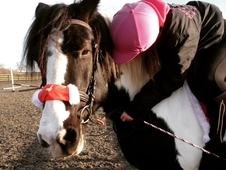 ****FOR SALE - 15, 1, 20year old, Piebald Cob Puzzle****