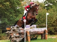 Perfect allrounder! 17.3hh gelding by Mill Law - event/hunt/allrounder