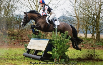 Fantastic all rounder/pony club pony for sale!
