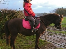 12.2hh registered sec B lead rein/ 2nd pony