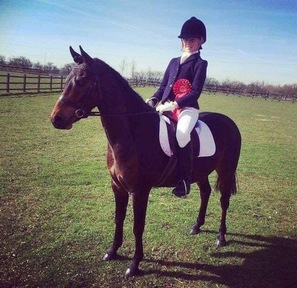 *REDUCED! Bay Welsh / British Riding Pony Part Bred